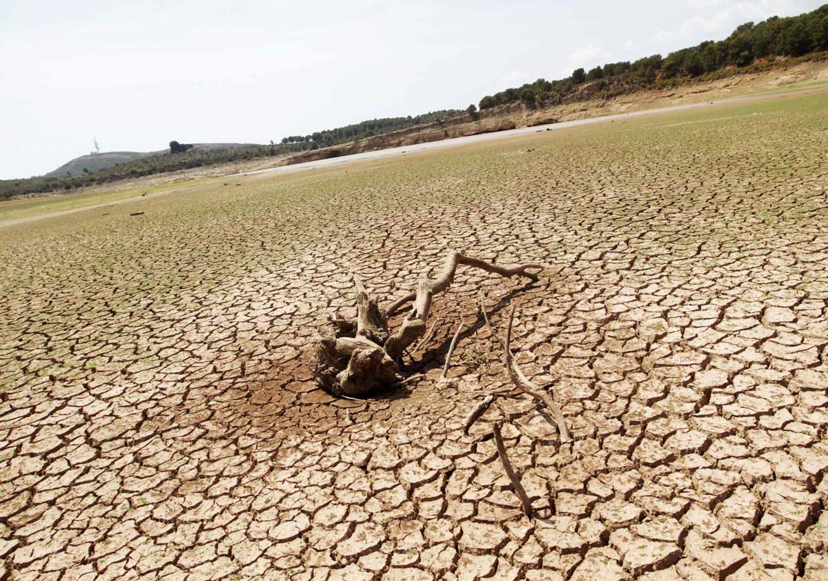 The remains of a tree lie over cracked ground at the almost dried out Maria Cristina reservoir near Castellon, July 25, 2014. Spain's south-east is suffering the worst drought after the driest winter in 150 years, according to local media. REUTERS/Heino Kalis (SPAIN - Tags: ENVIRONMENT AGRICULTURE SOCIETY) ORG XMIT: HJK01