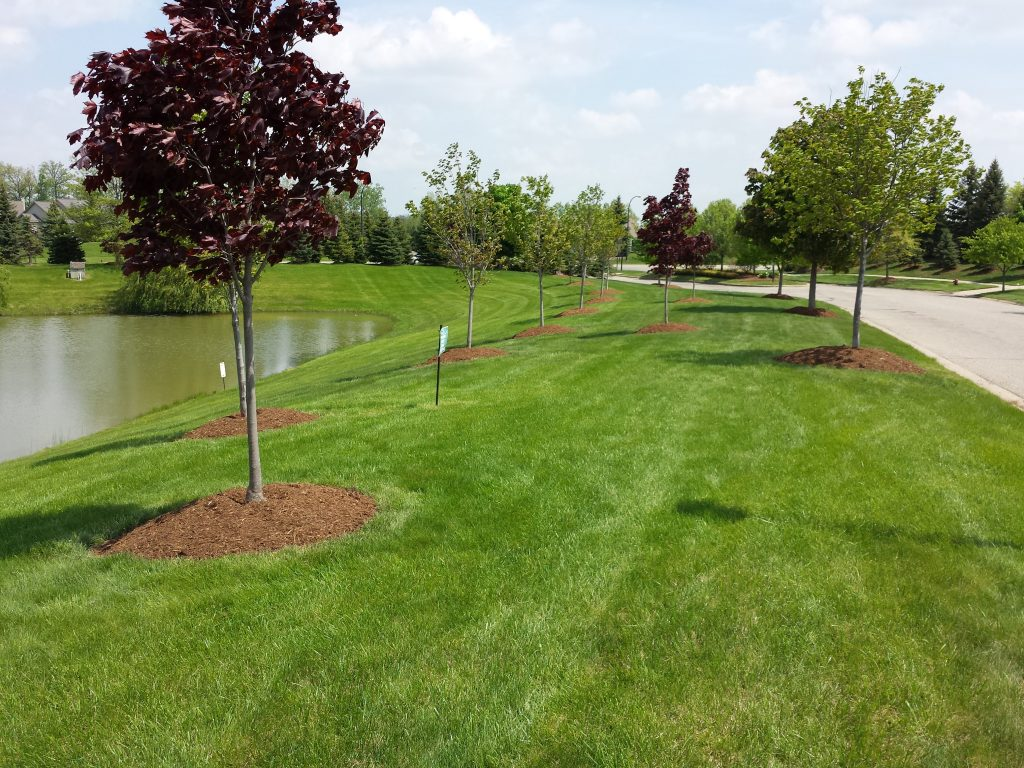 Weed Control - Salient Landscaping