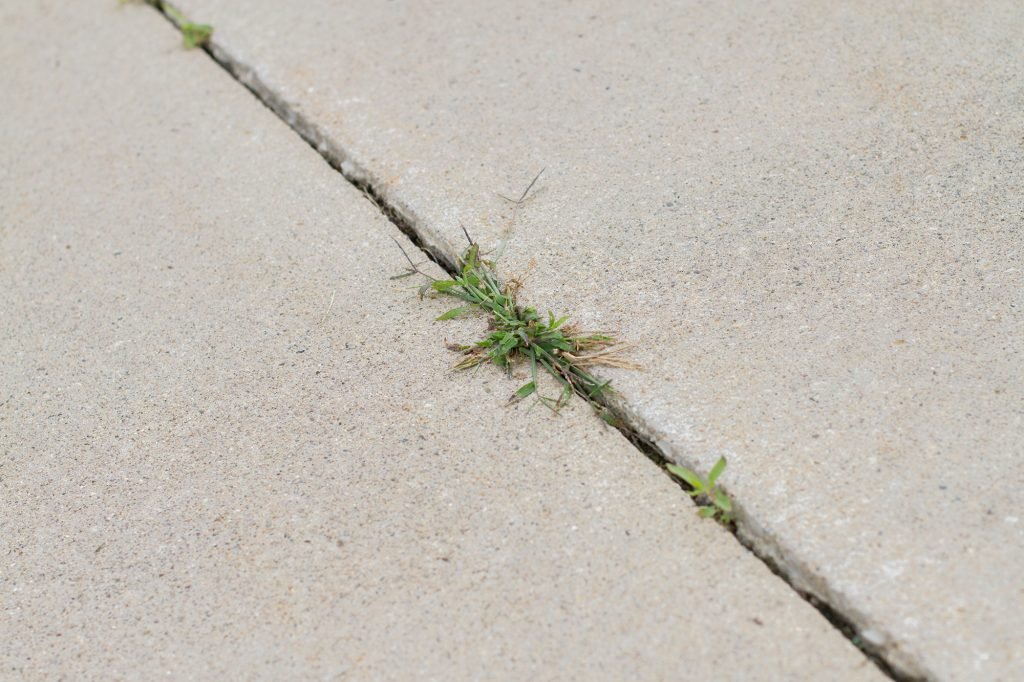 Hard Surface Weed Control - Salient Landscaping