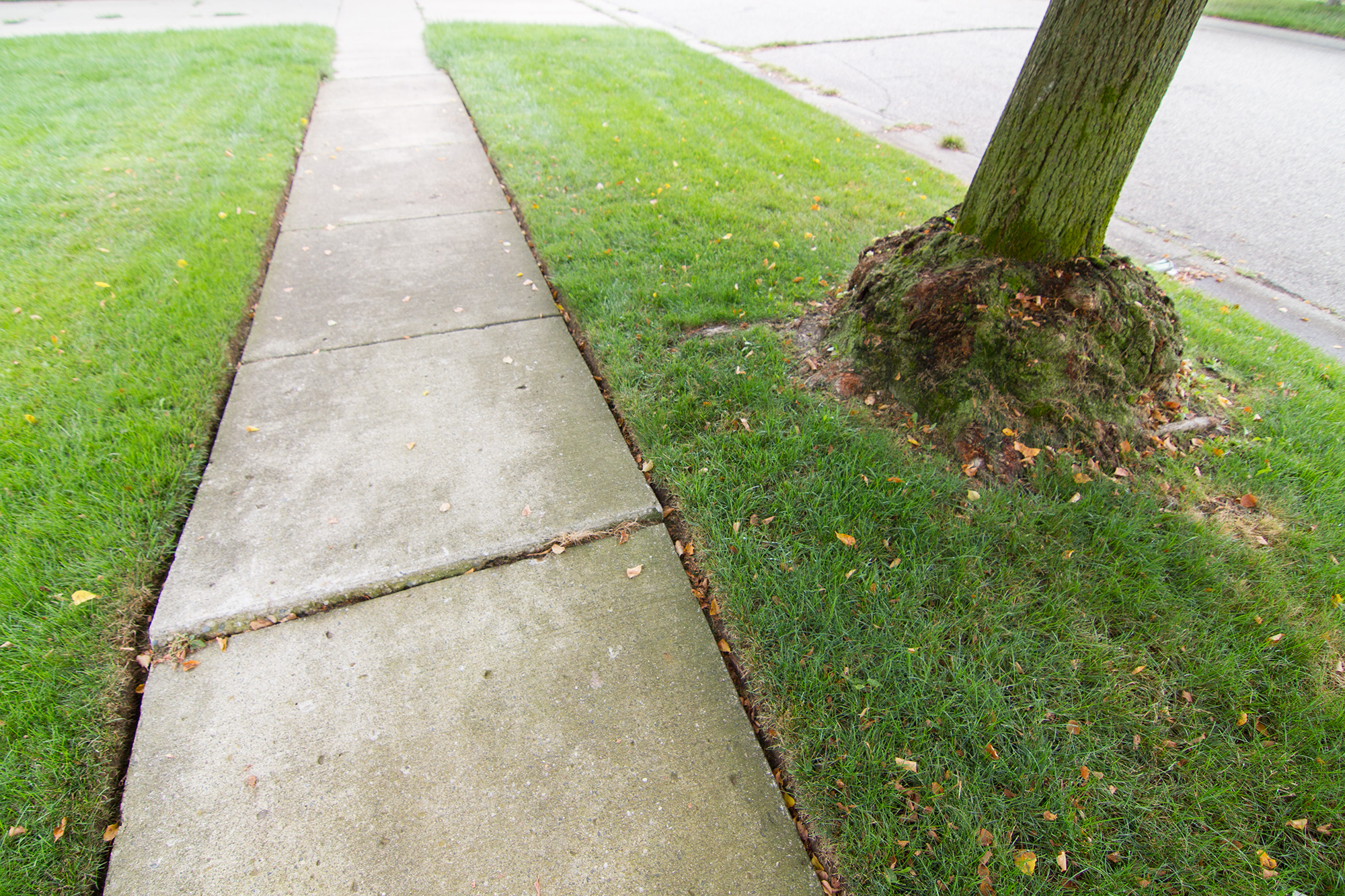Tree And Shrub Removal And Stump Grinding Salient